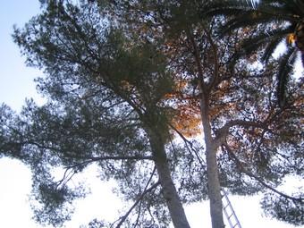 abattage arbre hyeres